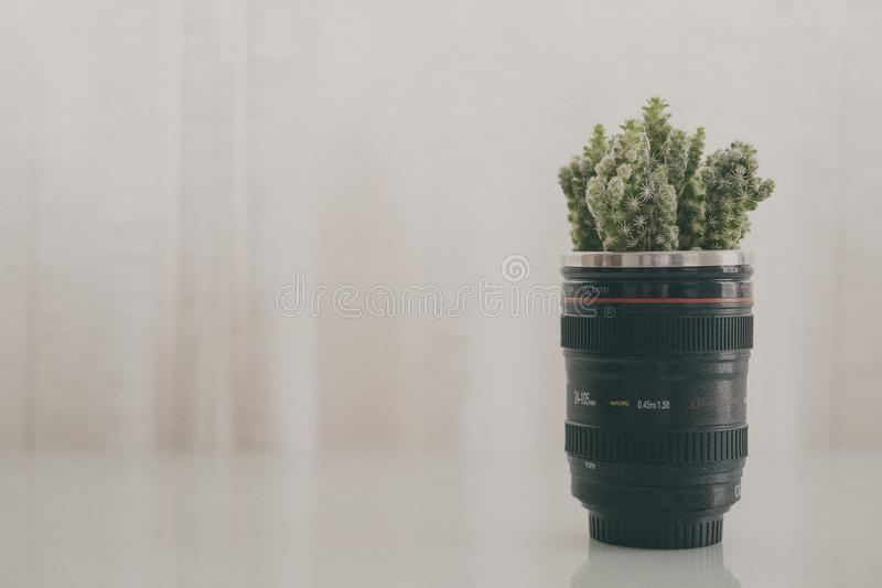 Green Leaf Plant in Black Camera Zoom Lens Plant Pot Screenshot royalty free stock photos