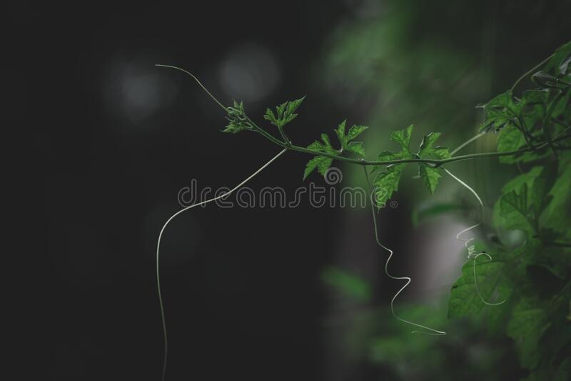 Green leaf on plant branch with blur dark background royalty free stock photos