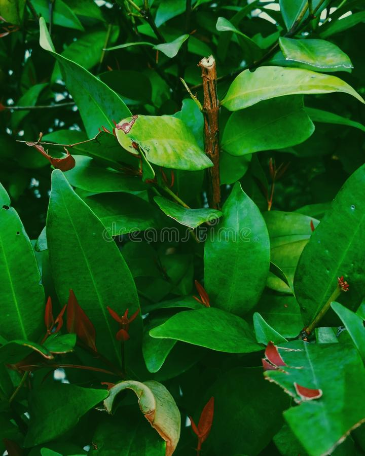 Green Leaf Plant With Brown Branch stock photo