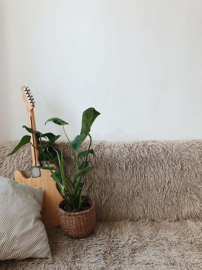 Green Leaf Plant Beside Brown Electric Guitar on Sofa stock photography