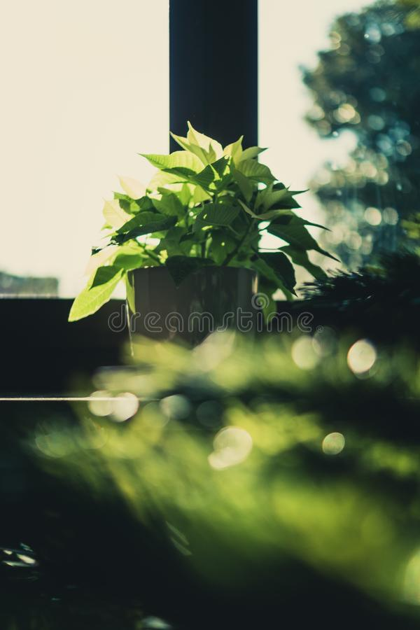 Green Leaf Plant on Brown Wooden Pot royalty free stock photography
