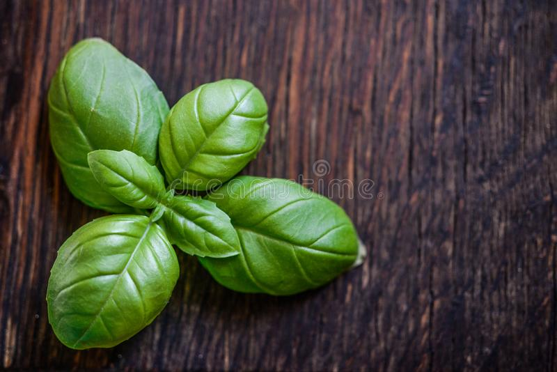 Green Leaf Plant on Brown Wooden Surface royalty free stock photo
