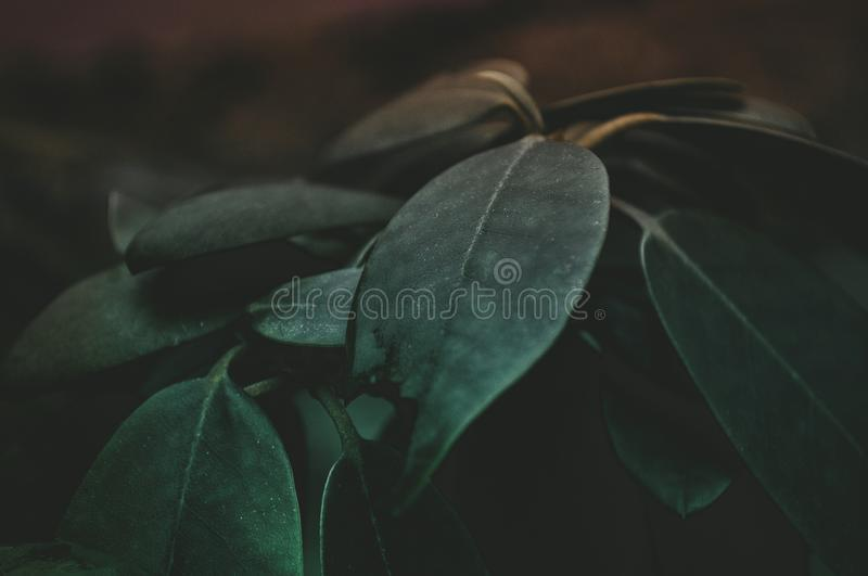 Green Leaf Plant Closeup Photography stock photography