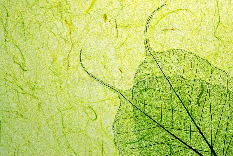 Green leaf with plant fibre