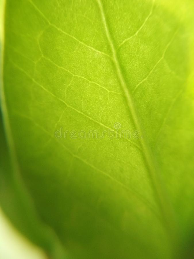 Green leaf plant flower blurred defocused background texture macro photo.  stock photography