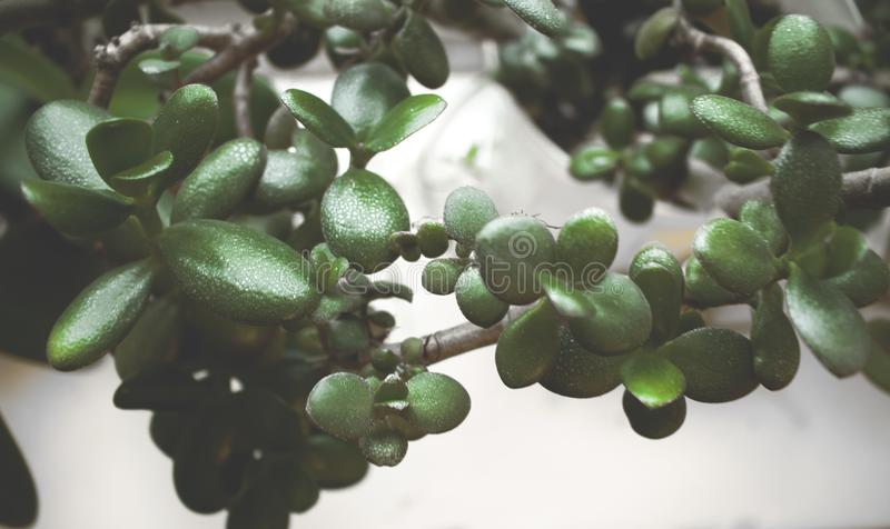 Green Leaf Plant Focus Photo stock images