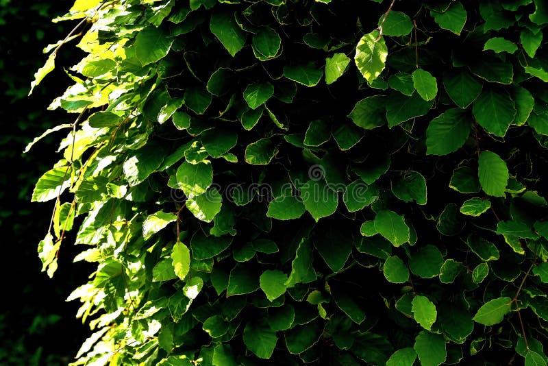 Green, Leaf, Plant, Vegetation royalty free stock images