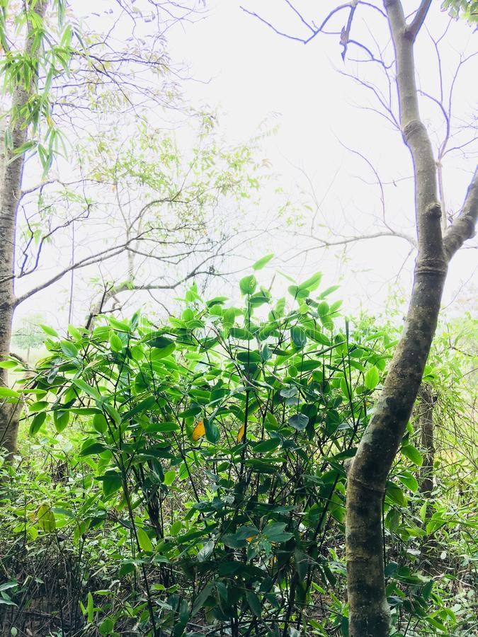 Green Leaf Plants and Trees at Daytime royalty free stock photography