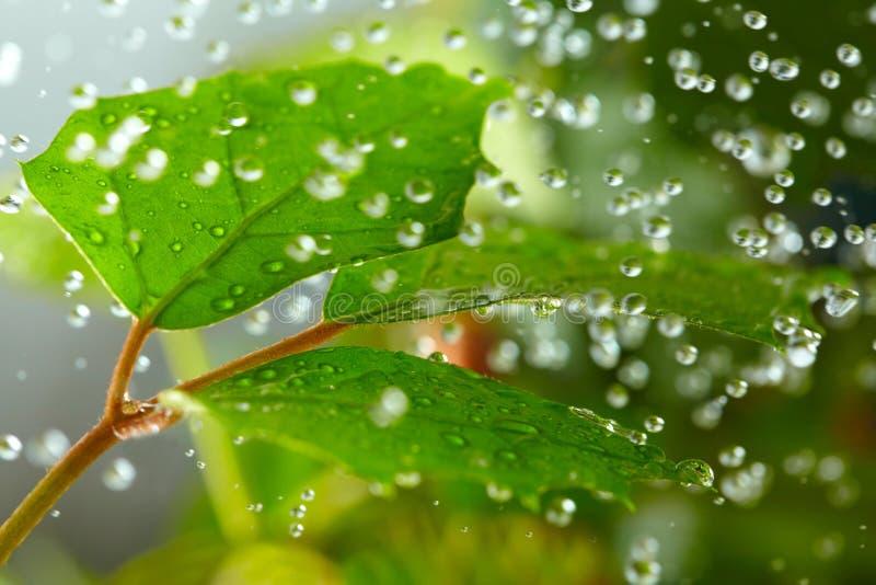 Green leaf in the rain stock photo