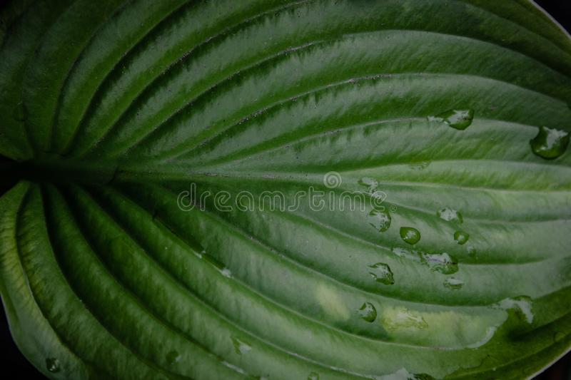 Green leaf with rain drops. Background stock image