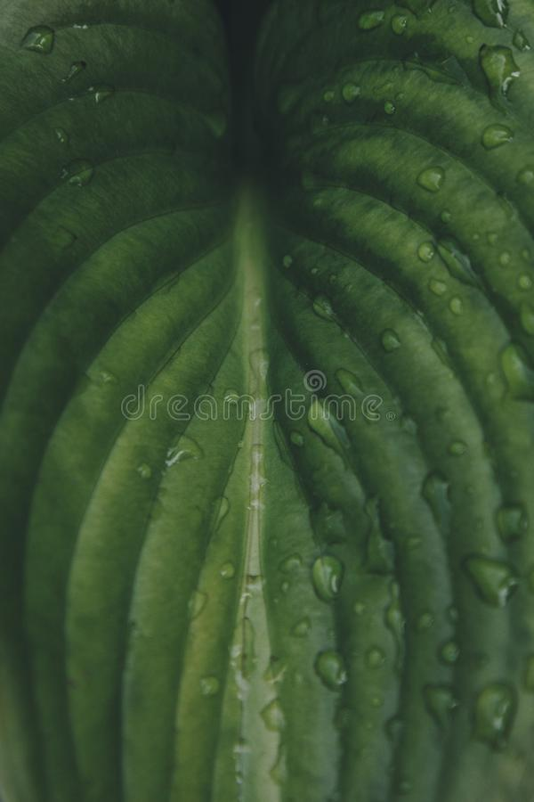 Green leaf with rain drops. Background stock photos