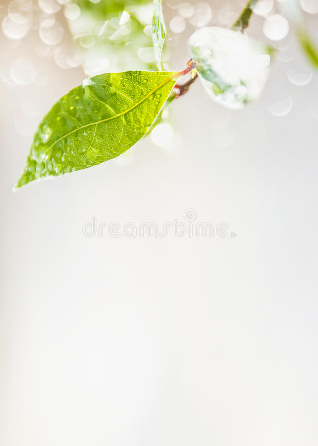 Green leaf with rain water drops and bokeh on light background, place for text, nature. Vertical stock photography