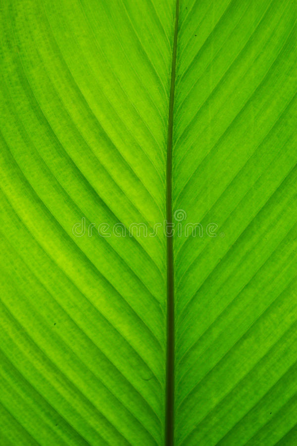 Green leaf scrolls. abstraction. background. stock images