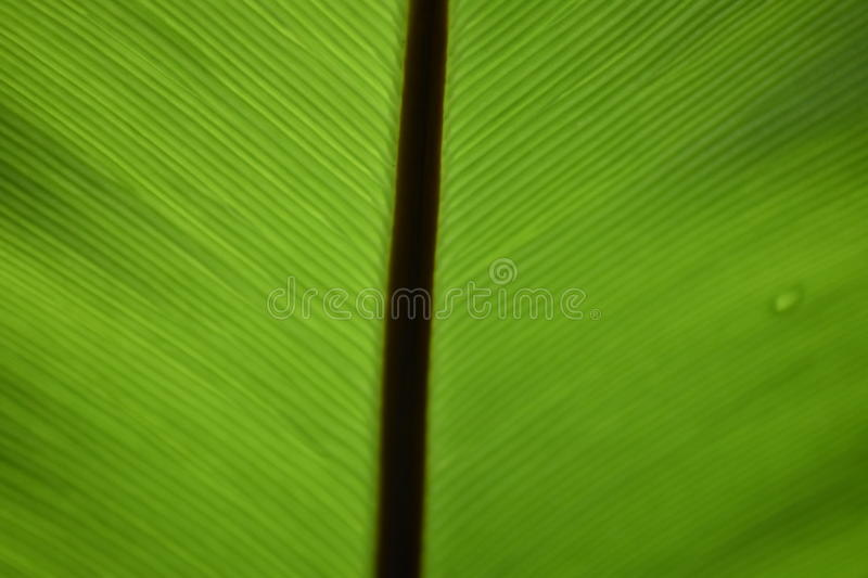 Green leaf and shadows light stock photos