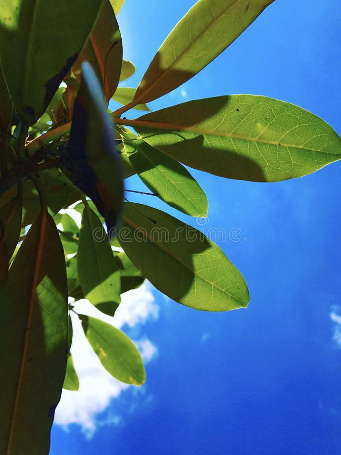 A green leaf in the sky stock photos