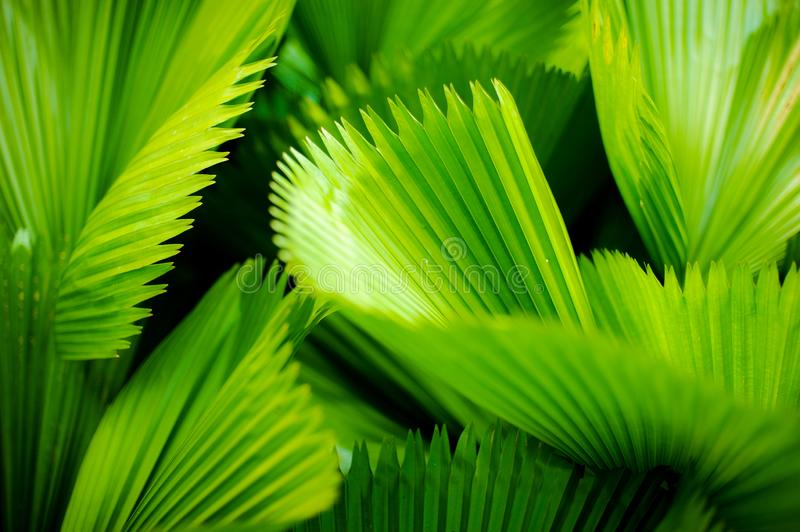 Green leaf with striped pattern in the sunlight royalty free stock photo