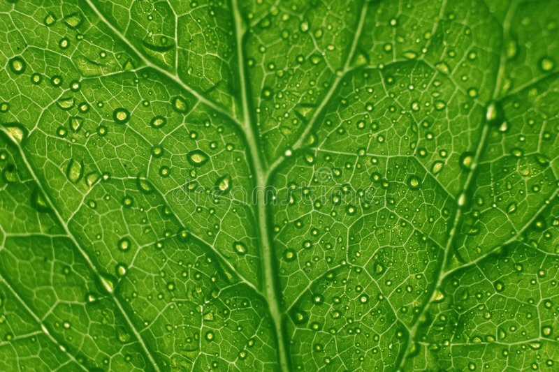 Download Green leaf structure stock photo. Image of diagonal, backgrounds - 1424768
