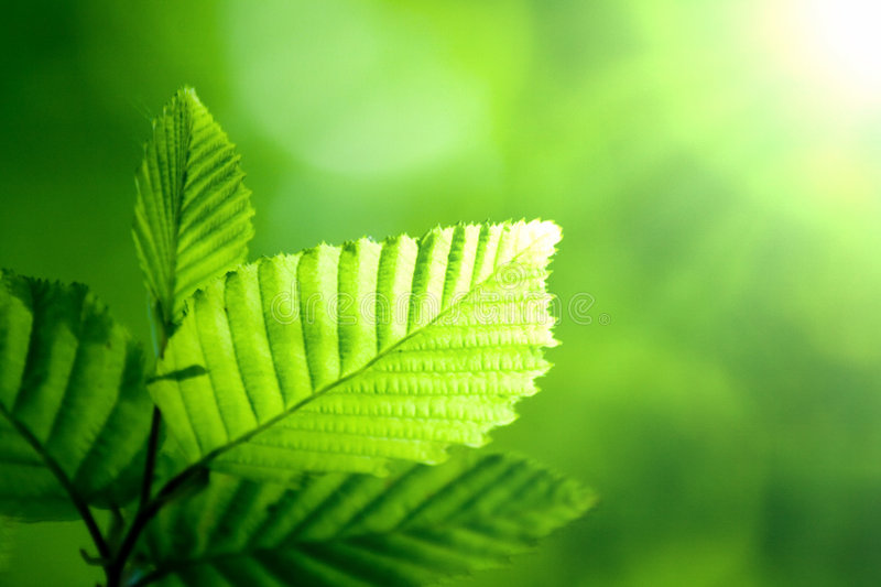 Green leaf in sunshine royalty free stock photos