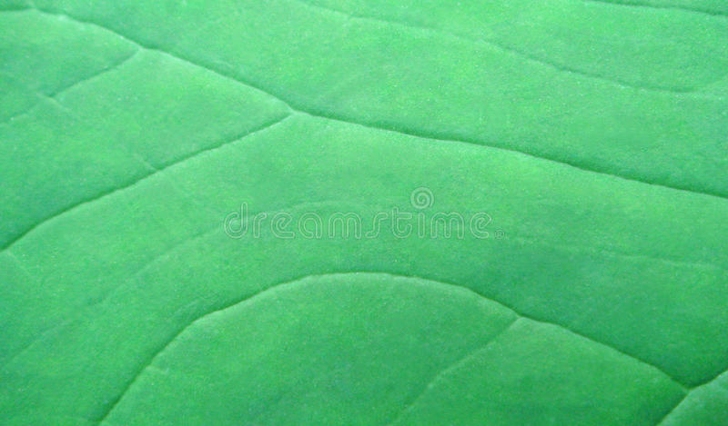 Download Green leaf surface stock image. Image of outdoors, autumn - 15883519