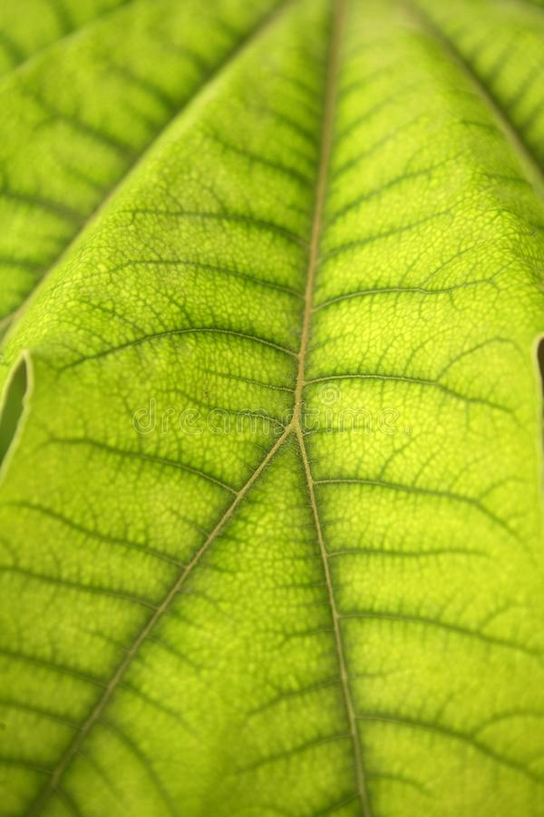 Download Green Leaf Texture Background Stock Image - Image: 11603181