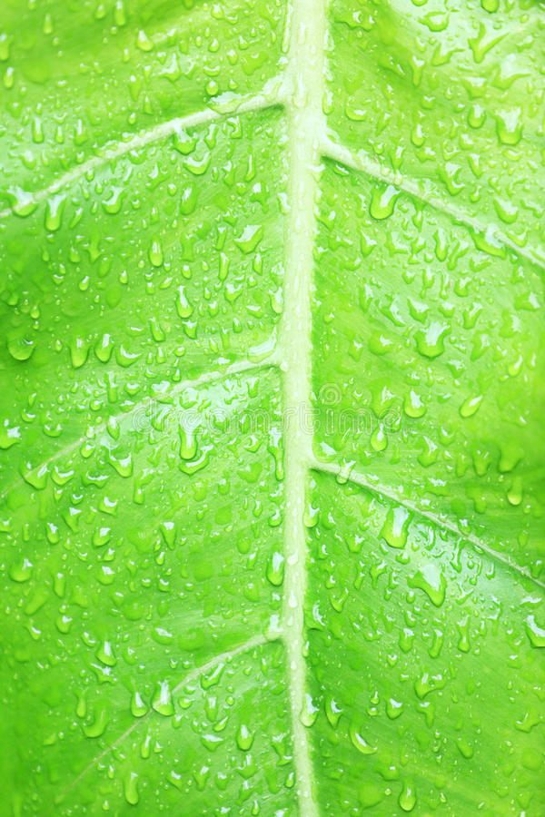 Download Green Leaf Texture Background Stock Image - Image: 26261107