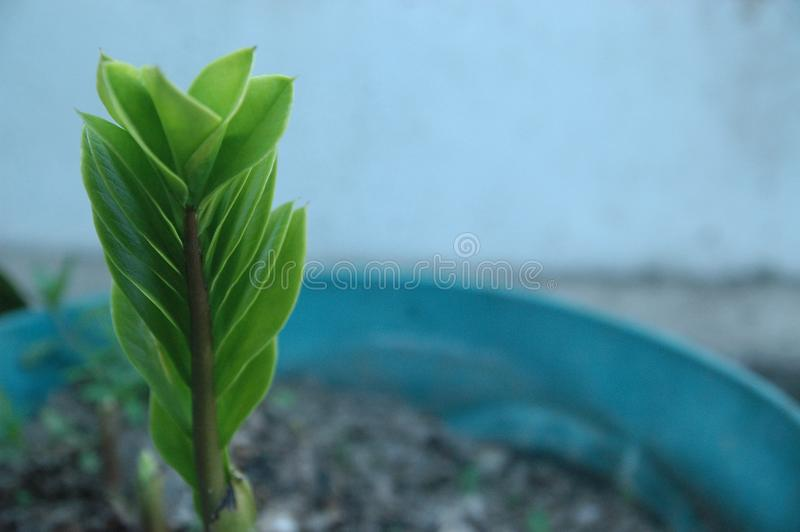 Green leaf texture blur background stock photos