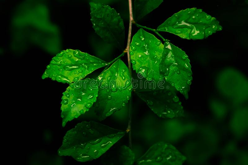 1 677 680 Nature Wallpaper Photos Free Royalty Free Stock Photos From Dreamstime