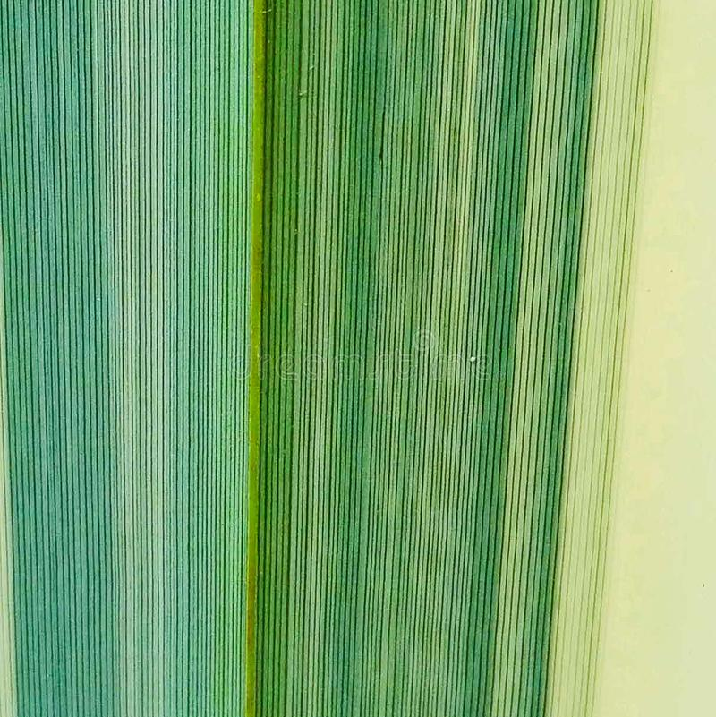Green leaf texture. Fibers of leaf with vertical lines and different shades of green royalty free stock photos