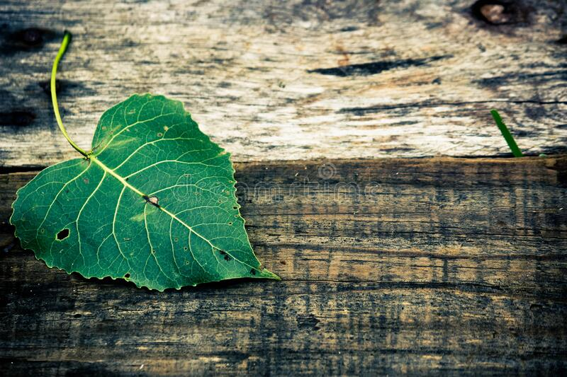 Green Leaf in Top of Brown Wooden Surface stock images