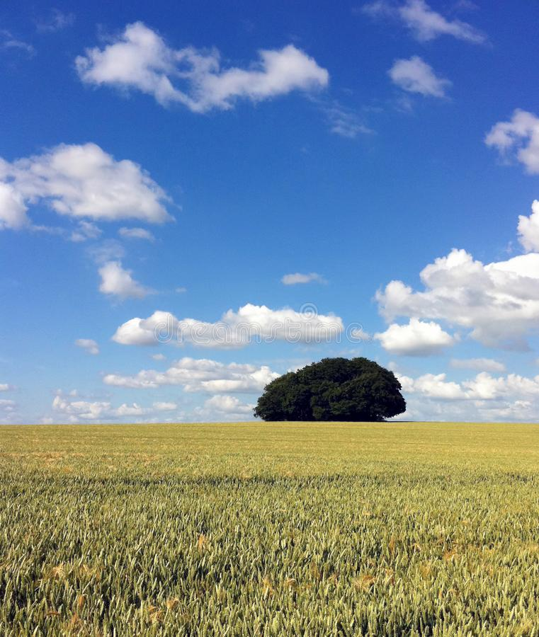 Green Leaf Tree and Grass Field Under Blue Sky and White Clouds stock photography