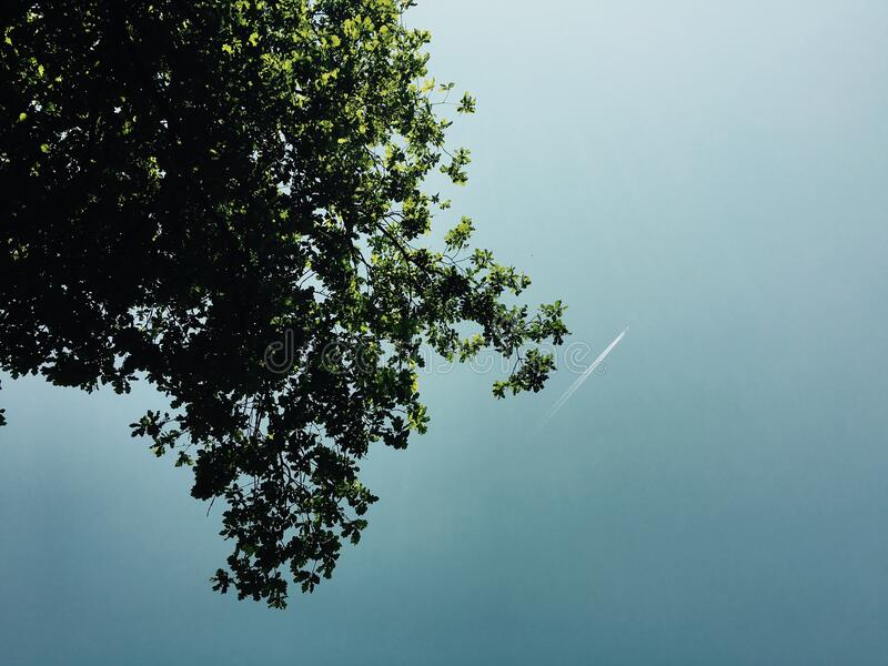 Green Leaf Tree on Low Angle Photography during Daytime royalty free stock photography