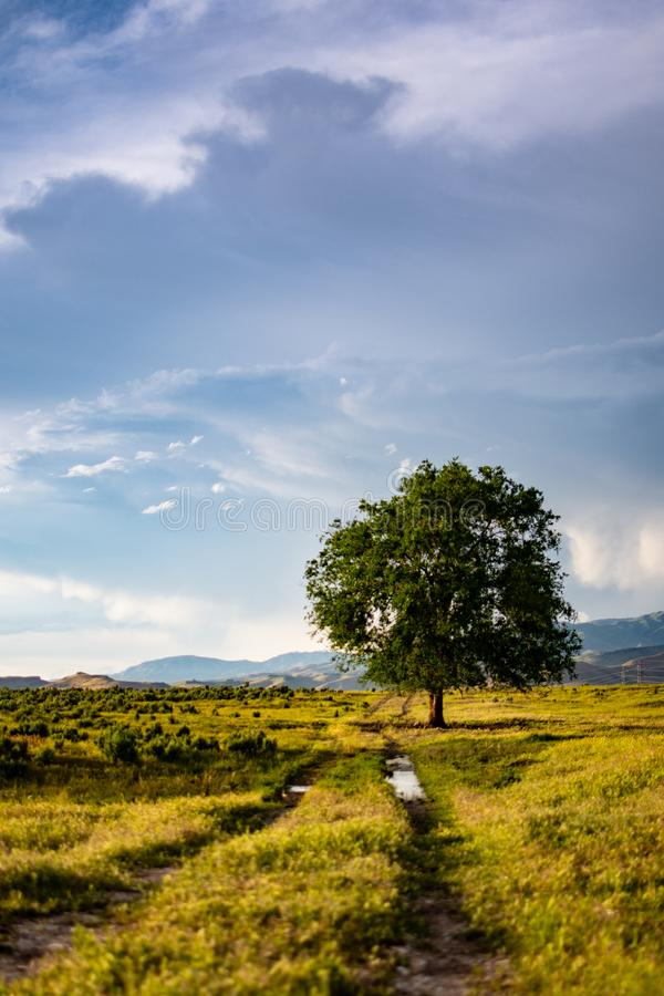 Green Leaf Tree in the Middle of Green Grass Field royalty free stock image