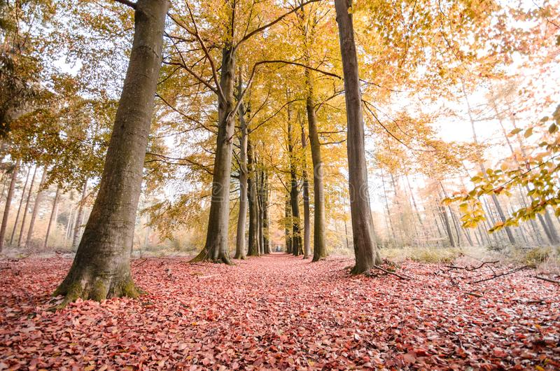 Green Leaf Trees Photography stock image