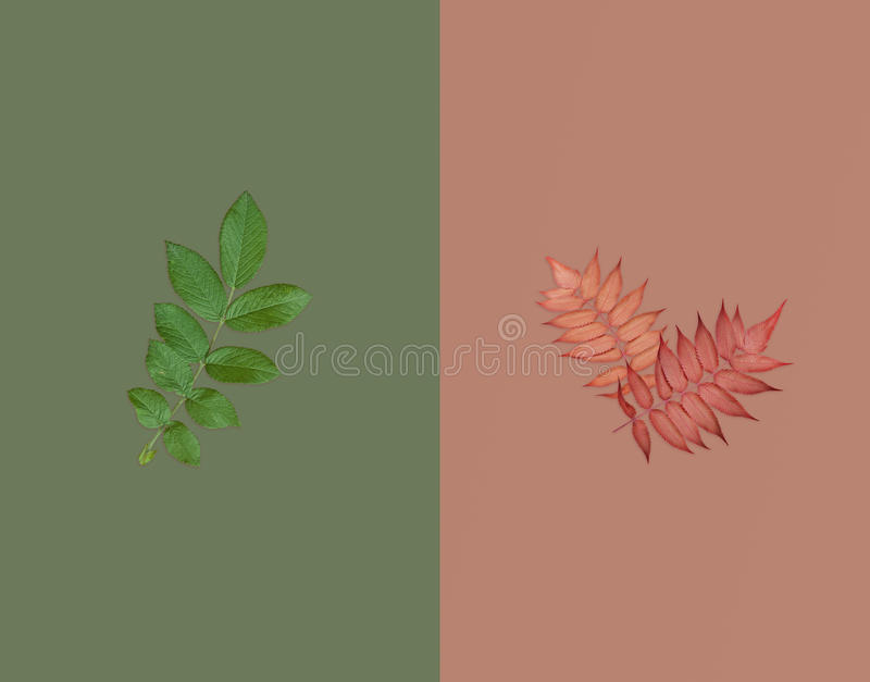 Green leaf and two red autumnal leaves on dark green on brown background. Summer-autumn sale concept. Flat lay stock photos