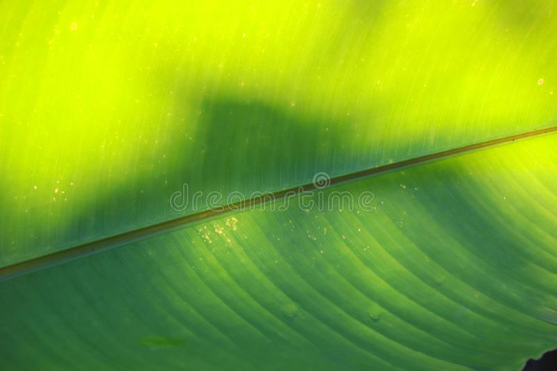 Green leaf two tone with daylight in nature. Beautiful texture and shade abstract background royalty free stock images