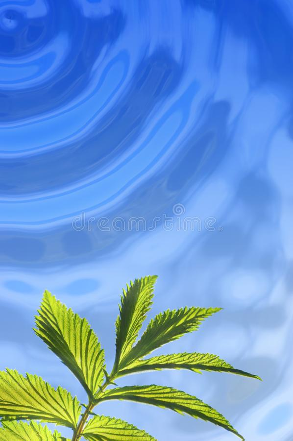 Green leaf under water royalty free stock photo