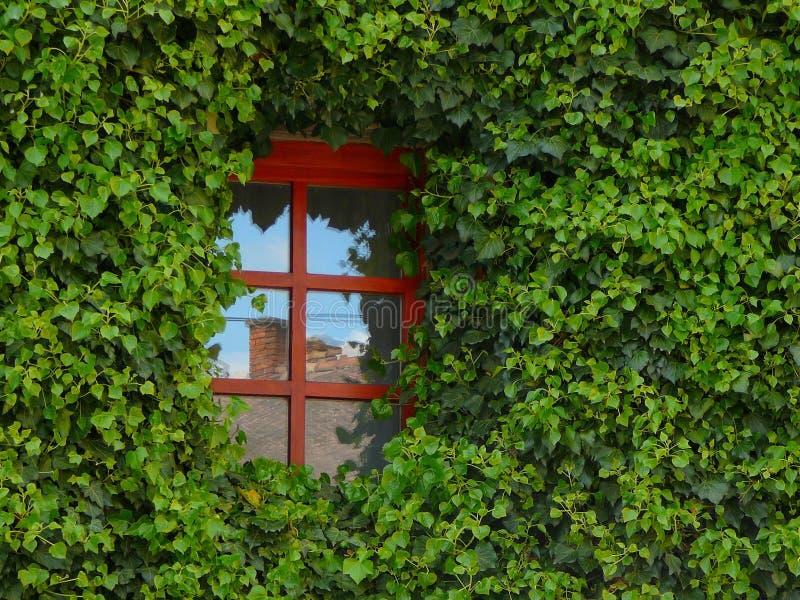 Green, Leaf, Vegetation, Plant royalty free stock images