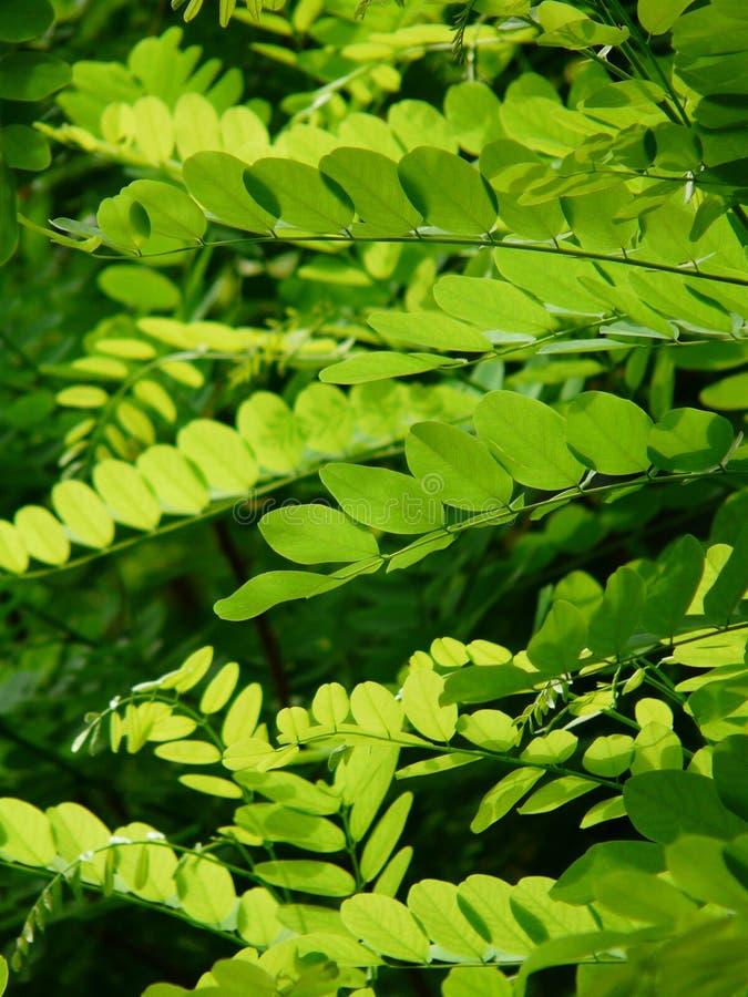 Green, Leaf, Vegetation, Plant stock photos