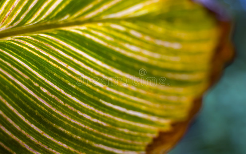 Green leaf with veins. Creative nature. stock image