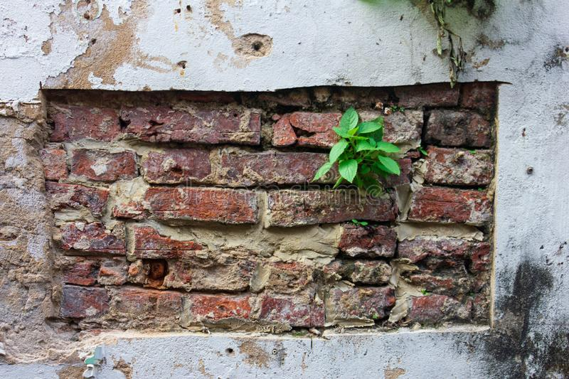 Green leaf on wall with moss plant stock photos