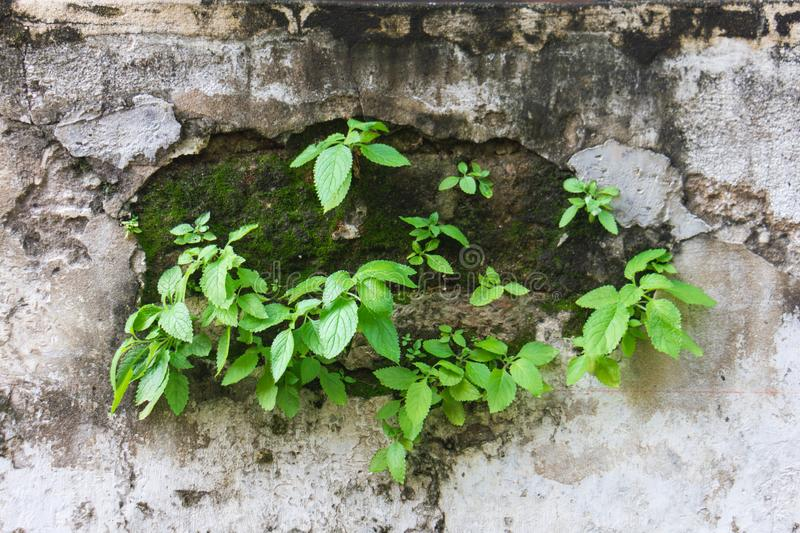 Green leaf on wall with moss plant royalty free stock images