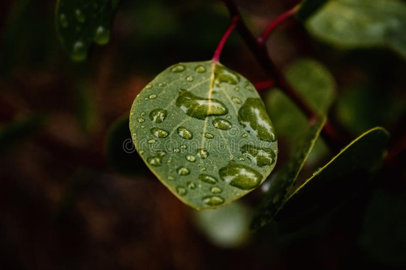 Green Leaf With Water Dew stock photo