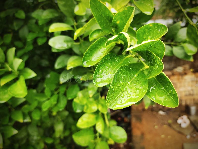 Green leaf with water drops. stock photo