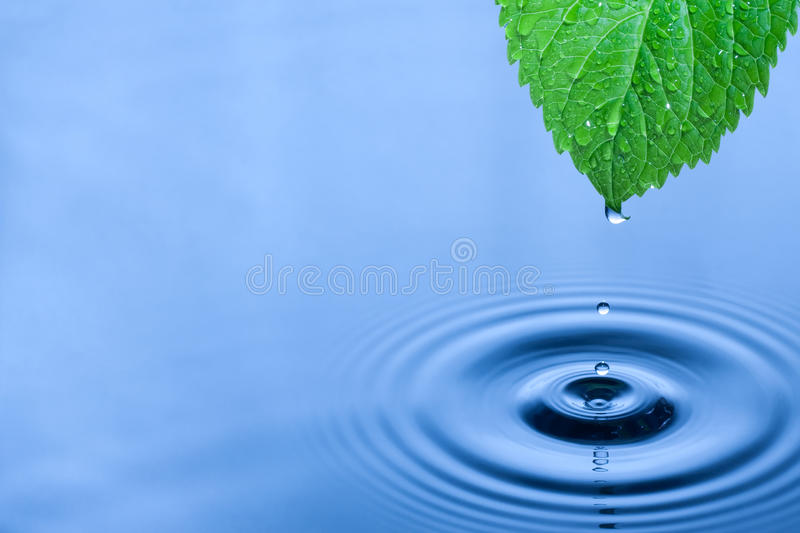 Download Green leaf water drops stock image. Image of cold, blue - 19146371