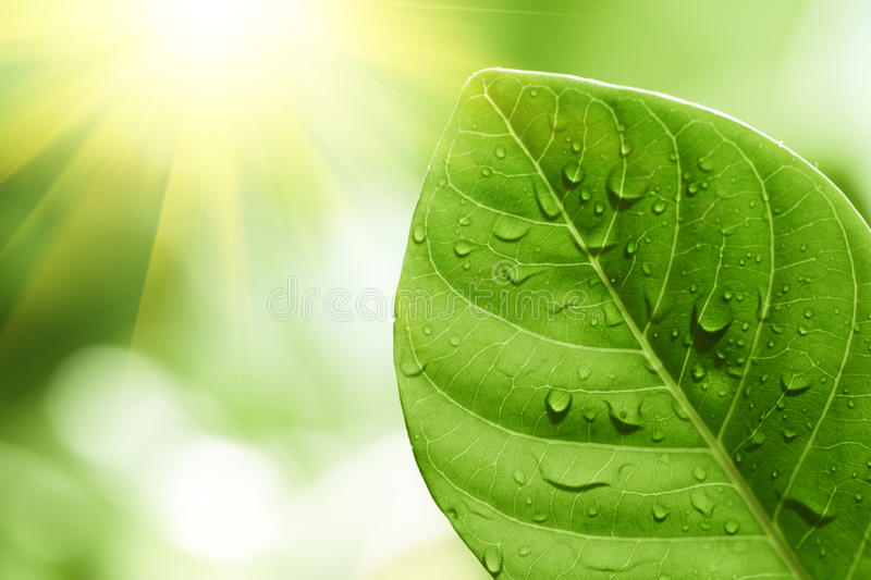 Green leaf with water drops on it stock image
