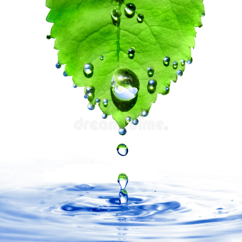 Green leaf with water drops and splash isolated on royalty free stock photos