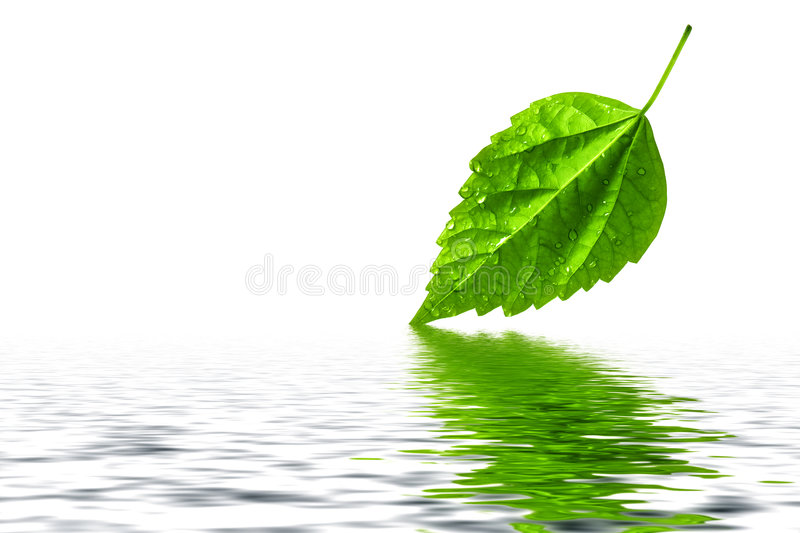 Green Leaf Water Reflection Royalty Free Stock Photo