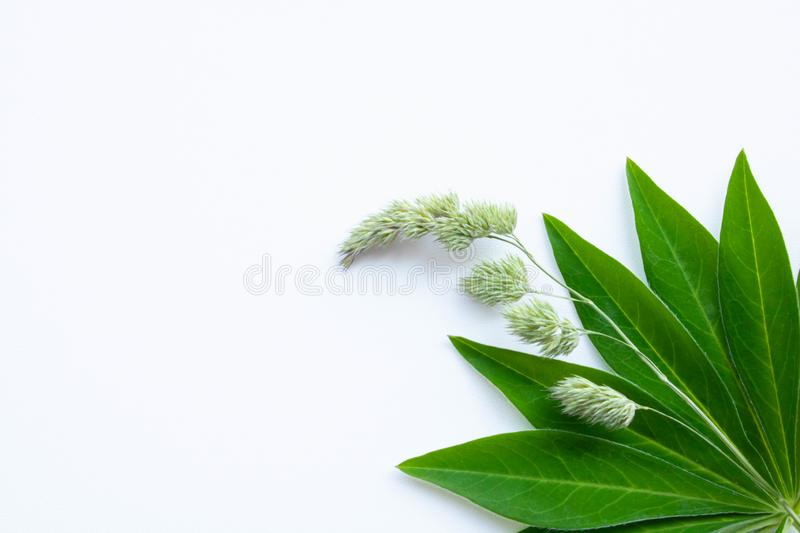 Green leaf on a white background stock images