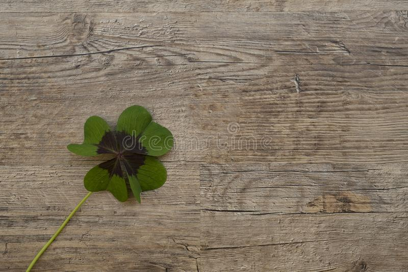 Green, Leaf, Wood, Flora royalty free stock images