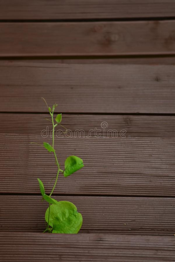 Green, Leaf, Wood, Wood Stain royalty free stock photography